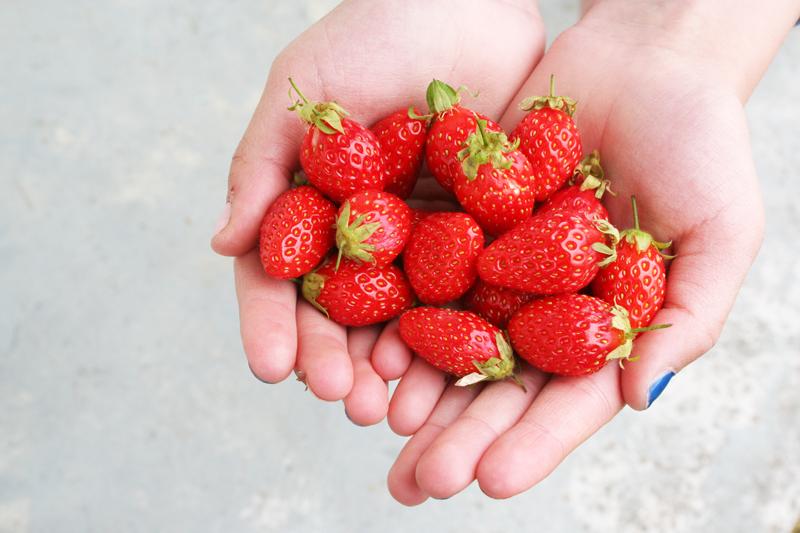 fraises1